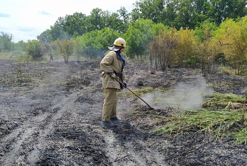 Невероятный урон экосистеме: на Днепропетровщине за сутки произошло 35 пожаров, - ФОТО, фото-3