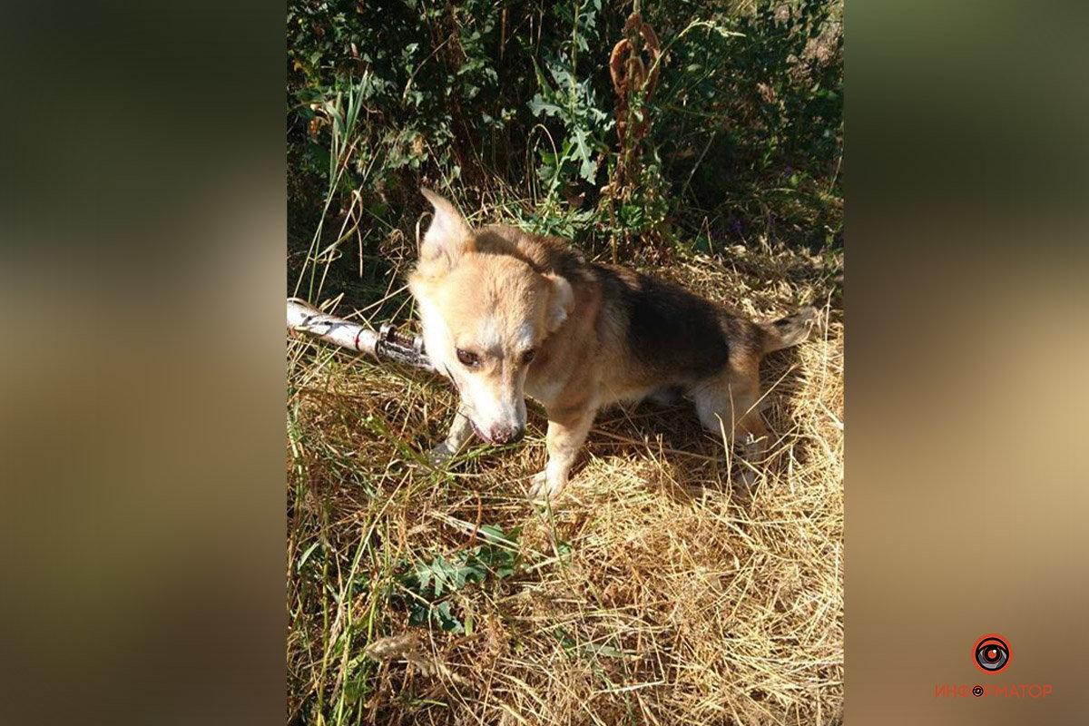 Днепровские коммунальщики спасли собаку из люка, фото-1