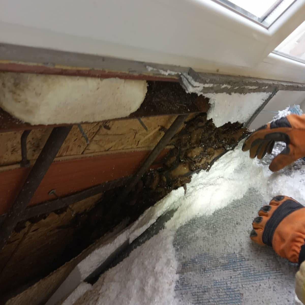 """""""Нелегальные жильцы"""": в Днепре в обшивке балкона нашли более 500 летучих мышей, фото-2"""