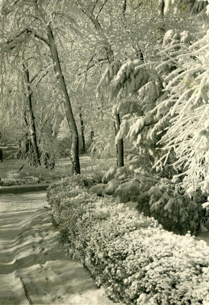 Один из днепровских парков зимой, 1950-е годы