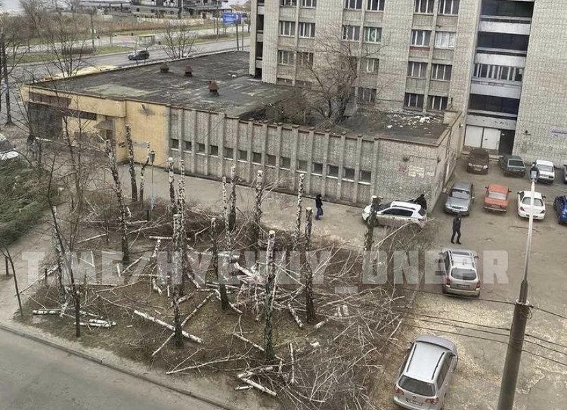 На Победе в Днепре вырубили берёзы: горсовет обратился в полицию, - ФОТО , фото-3