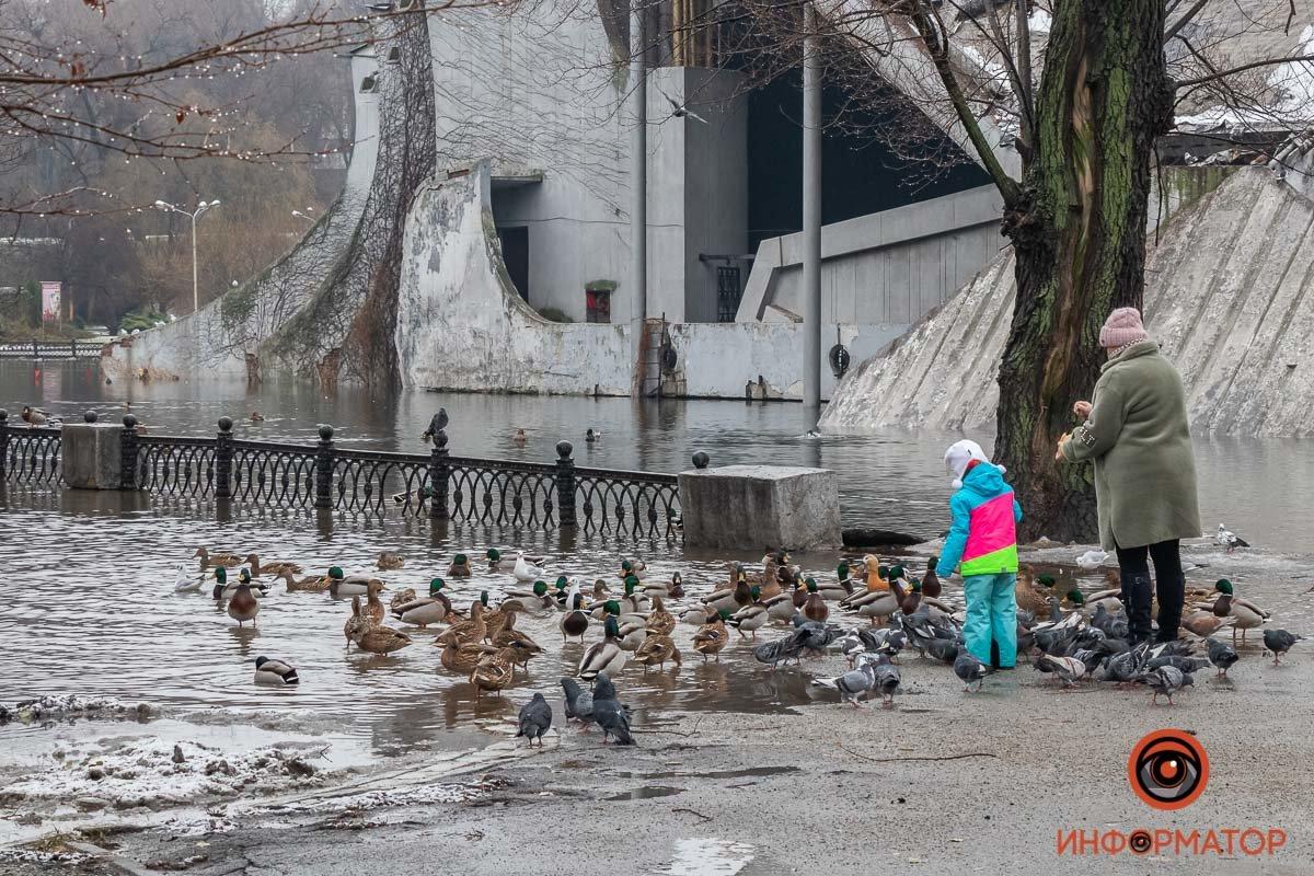 В Днепре затопило парк Глобы, фото-1