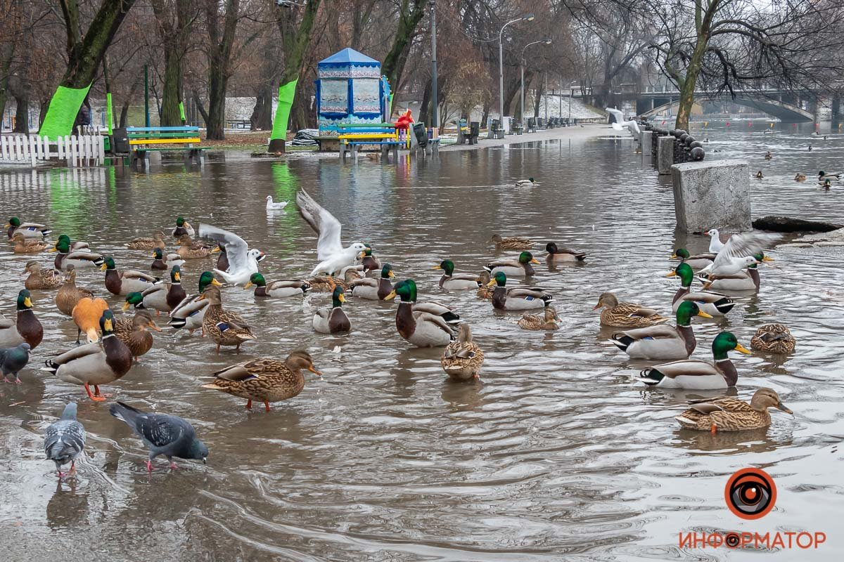 В Днепре затопило парк Глобы, фото-2
