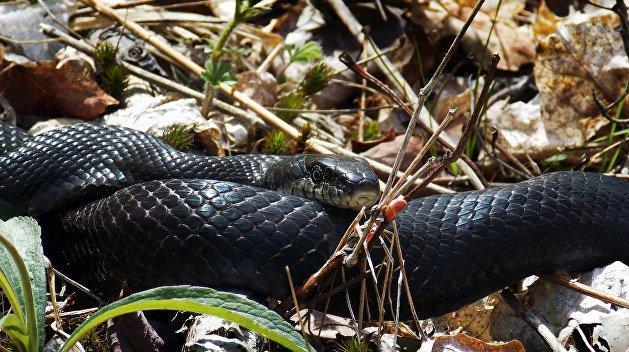 Змеи Днепропетровщины: памятка местным жителям и гостям региона, фото-3