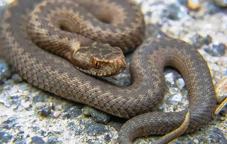Змеи Днепропетровщины: памятка местным жителям и гостям региона, фото-1