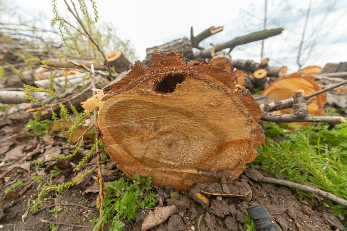 """В Днепре появился """"робот-трансформер"""" для устранения аварийных деревьев, - ФОТО, фото-7"""