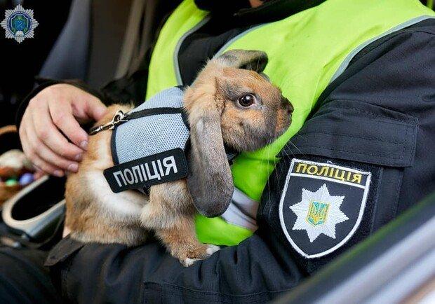 """В Днепре появился """"кролик полицейский"""", фото-1"""