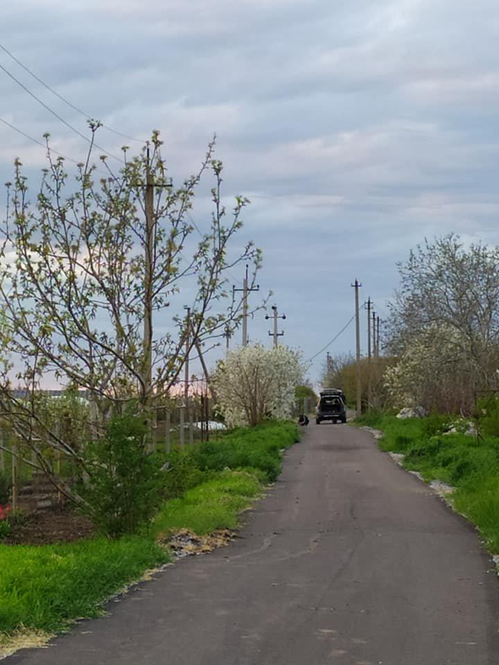 На Днепропетровщине укладчики асфальта ездят рвать на нем сорняки, фото-2