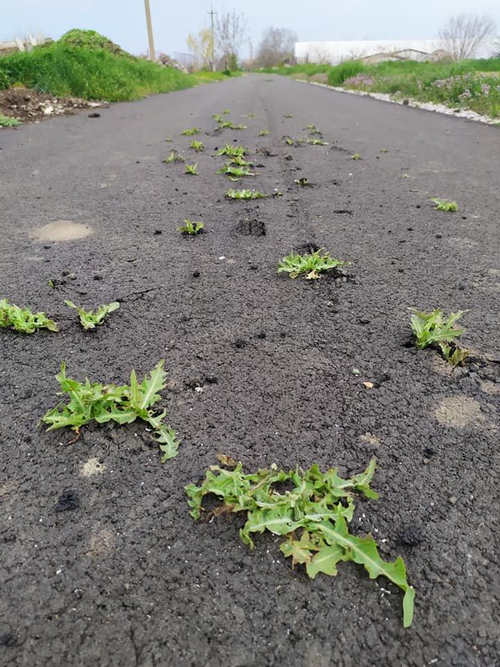 На Днепропетровщине укладчики асфальта ездят рвать на нем сорняки, фото-1