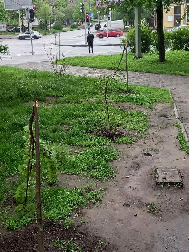 В центре Днепра пьяный подросток разрушил новую аллею: подробности, фото-1
