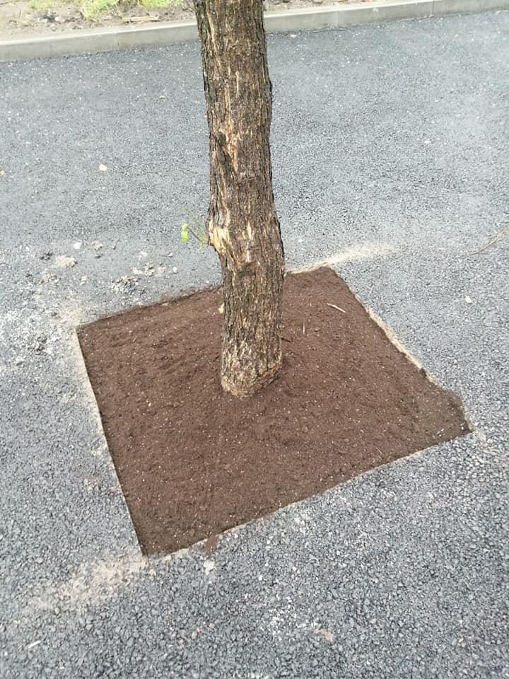 Одумались: в Днепре спасли деревья которые закатали в асфальт, фото-2