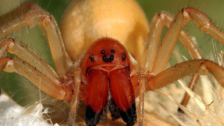 В Днепре мужчину укусил ядовитый паук: членистоногие опять активировались, фото-2