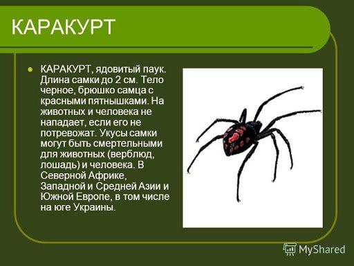 В Днепре мужчину укусил ядовитый паук: членистоногие опять активировались, фото-1