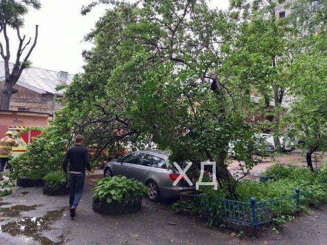 В Днепре не успевают убирать поваленные из-за непогоды деревья, фото-1