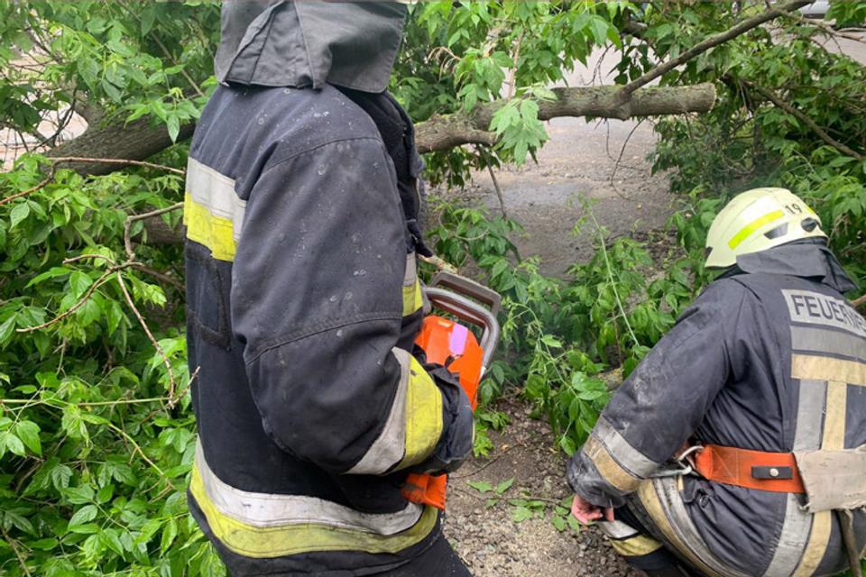 В Днепре не успевают убирать поваленные из-за непогоды деревья, фото-2