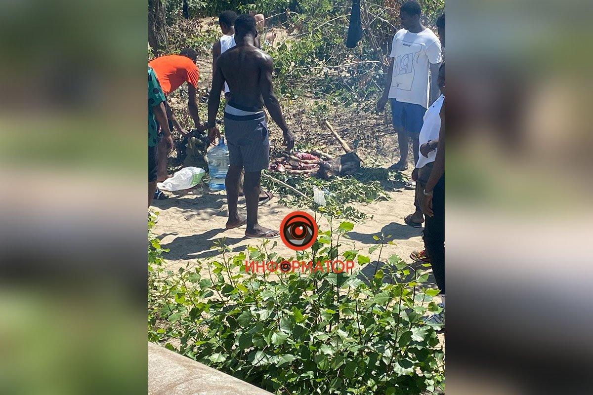Ради потепления: в Днепре нигерийцы приносили в жертву коз, фото-1