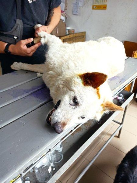 Разрез как при операциях: на Днепропетровщине у психически больной женщины отобрали собаку, фото-1