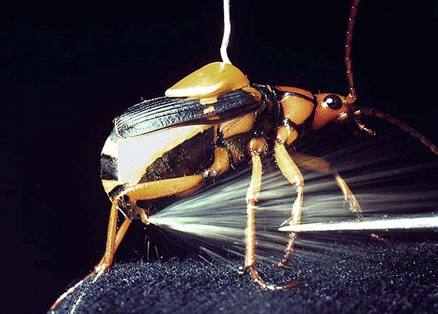 Не фантастические твари: топ-14 существ, которых стоит бояться жителям Днепра, фото-13