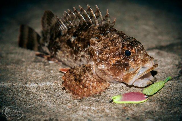 Не фантастические твари: топ-14 существ, которых стоит бояться жителям Днепра, фото-3