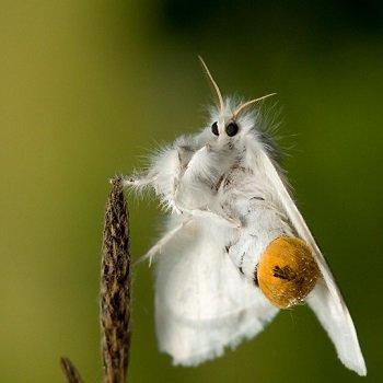 Не фантастические твари: топ-14 существ, которых стоит бояться жителям Днепра, фото-4