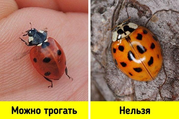 Не фантастические твари: топ-14 существ, которых стоит бояться жителям Днепра, фото-14