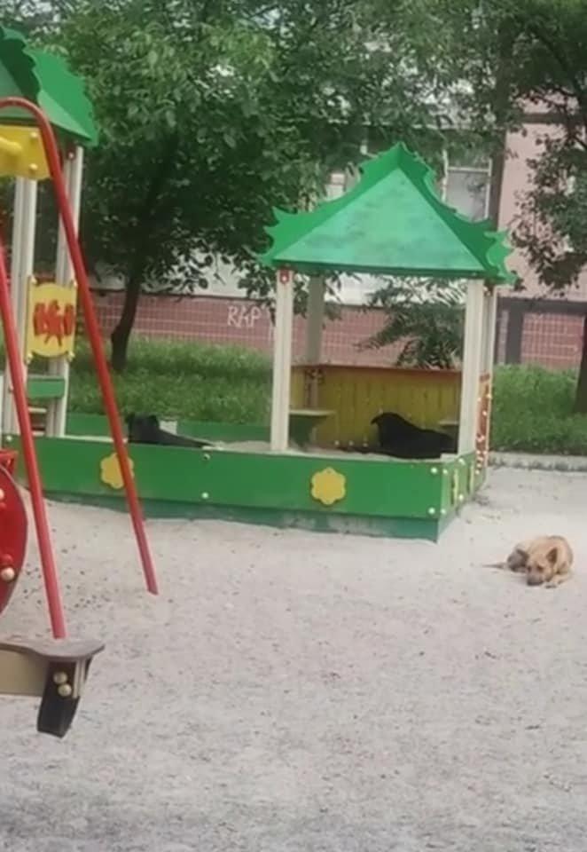 Под Днепром животные с бирками на ушах загрызли котенка: подробности, фото-1