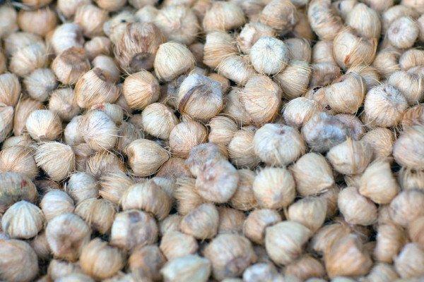 В Днепр и область попал орех из Пакистана, вызывающий онкозаболевание: как выглядит опасный плод, фото-2