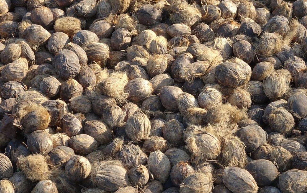 В Днепр и область попал орех из Пакистана, вызывающий онкозаболевание: как выглядит опасный плод, фото-1