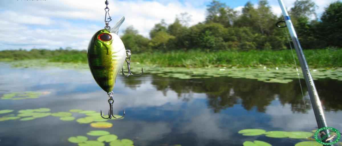 Где ловиться рыба в днепропетровске? Рыбу запретят Рыбу запрещают